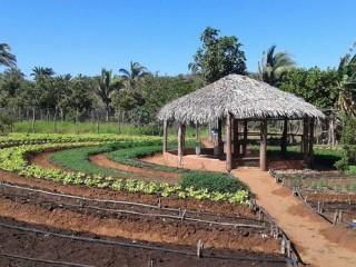 Produtores rurais de Oeiras participam de capacitação em hortas orgânicas 5