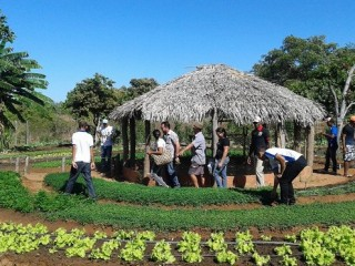 Produtores rurais de Oeiras participam de capacitação em hortas orgânicas 8