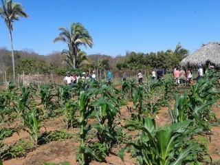 Produtores rurais de Oeiras participam de capacitação em hortas orgânicas 10