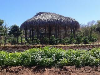 Produtores rurais de Oeiras participam de capacitação em hortas orgânicas 14