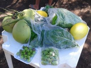 Produtores rurais de Oeiras participam de capacitação em hortas orgânicas 15