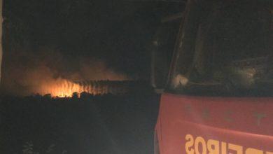 Incêndio de grandes proporções atinge plantação de Eucalipto no Piauí 2