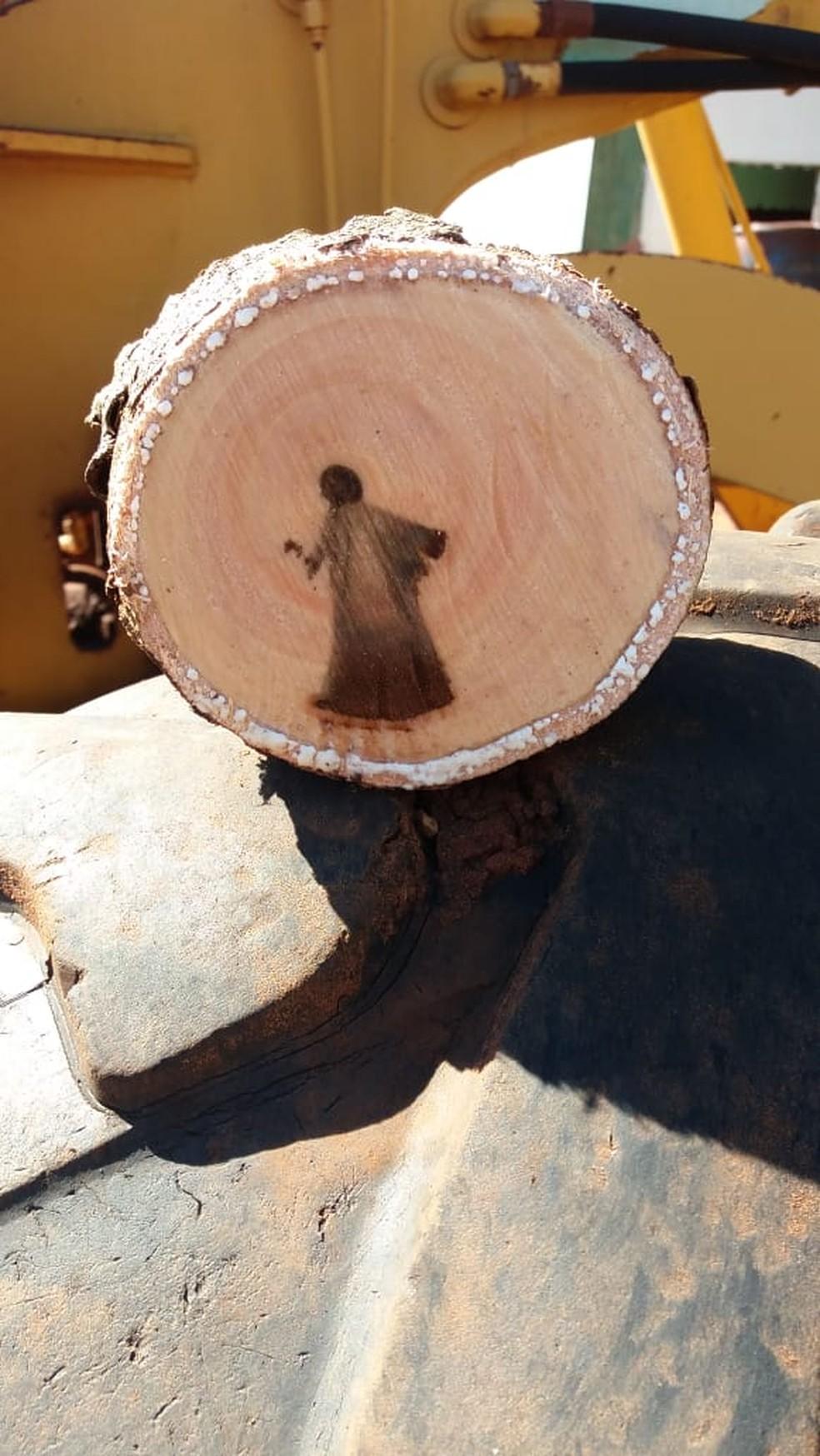 Biólogo esclarece fato da imagem de 'Jesus' que surgiu em tronco de árvore 3