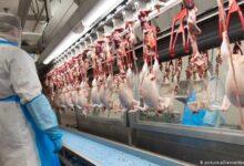 China detecta novo coronavírus em frango importado do Brasil 18