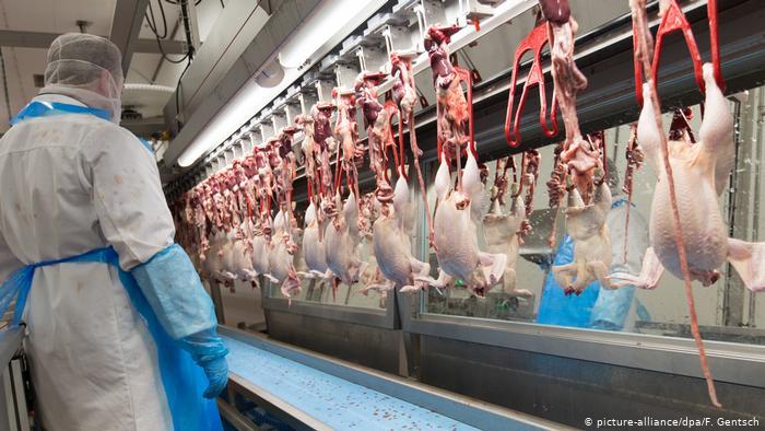 China detecta novo coronavírus em frango importado do Brasil 1