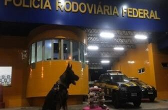 PRF apreende maconha e cloridrato de cocaína avaliada em R$ 145 mil na BR 230 em Floriano 5