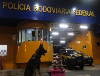 PRF apreende maconha e cloridrato de cocaína avaliada em R$ 145 mil na BR 230 em Floriano 1
