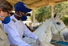 Soros produzidos por cavalos têm anticorpos potentes para covid-19 15