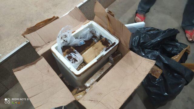 PM prende jovem com 59 kg de maconha dentro de ônibus em Simplício Mendes 3