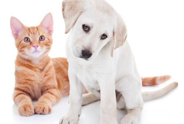 Senado aprova pena de até 5 anos para quem maltratar cão e gato 1