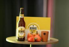 Nova cerveja de caju muda a vida de 600 famílias que vivem da cadeia produtiva no Piauí 8