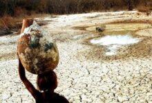 49 municípios do Piauí estão em situação de emergência por conta da seca 9