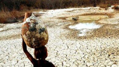 49 municípios do Piauí estão em situação de emergência por conta da seca 4