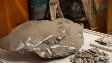 Cientistas esclarecem origem dos pterossauros 7