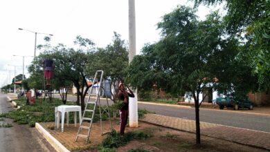 Secretaria Municipal de Obras de Tanque do Piauí inicia limpeza pública e poda de arvores em ruas e avenidas da cidade 5