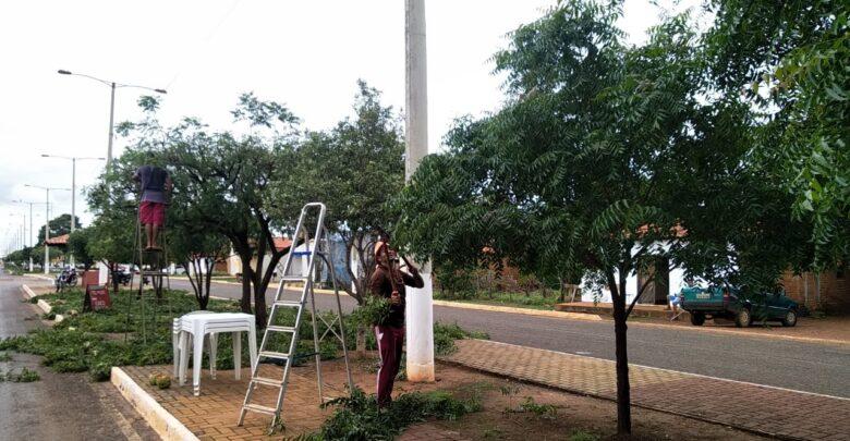 Secretaria Municipal de Obras de Tanque do Piauí inicia limpeza pública e poda de arvores em ruas e avenidas da cidade 1