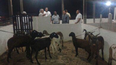 Ministério Público investiga irregularidades na cobrança de taxas no Matadouro municipal de Oeiras 3