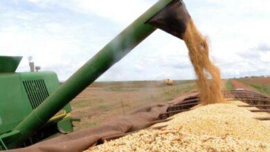 Produção de grãos no Piauí deve alcançar marca histórica e o segundo maior crescimento do país 7